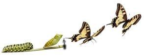 borboleta-metamorfose